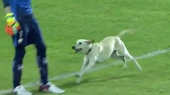 Must See: Soccer match halted by happiest of dogs