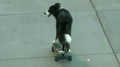 Must See: Dog rips it up on skateboard in San Francisco